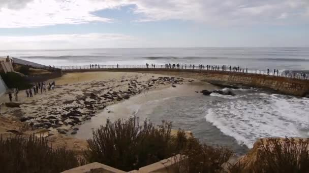 Seals on La Jolla Cove in San Diego