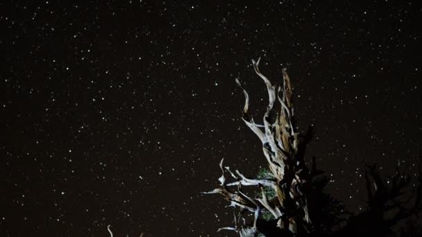 Antik Yollar : Star yollar üzerinde antik bristlecone u2014 stok video © naotharp #43492565