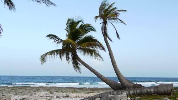 Tropical beach- és pálmafák között