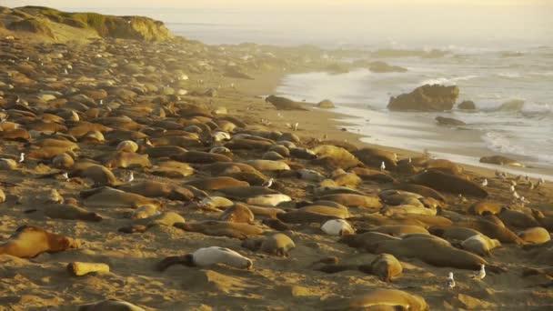 Elephant Seals Colony