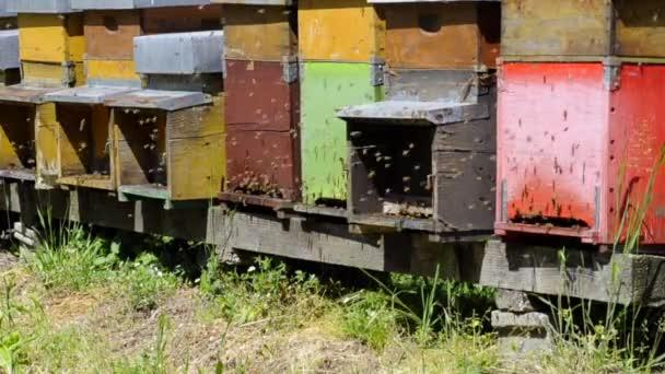včely v práci v úlu