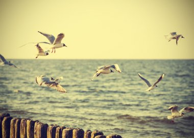 Filtered Vintage Retro Styled birds on the sea.