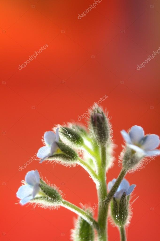 Pink flower sumer time love