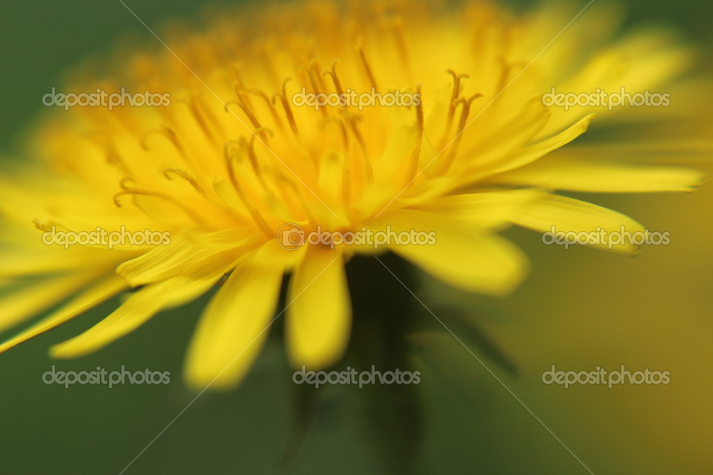 Sumer time yellow flower