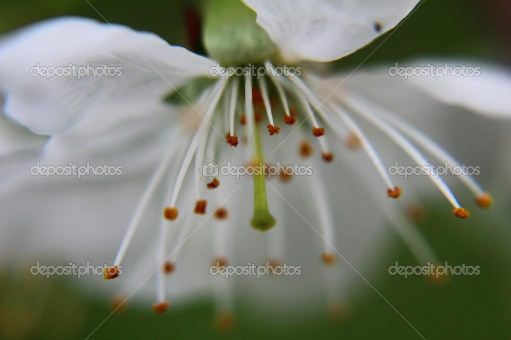 Sumer time flower