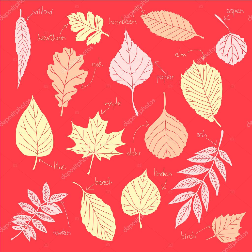 The leaves on a red background