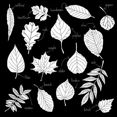 Collection of different kinds of leaves