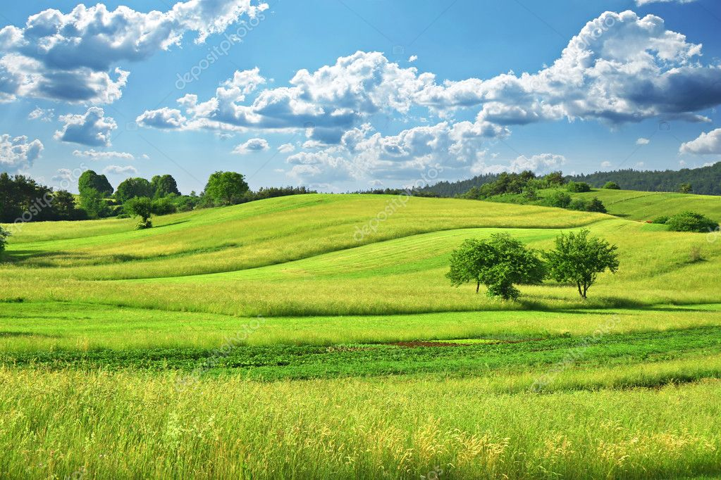 Фотообои Grass Field
