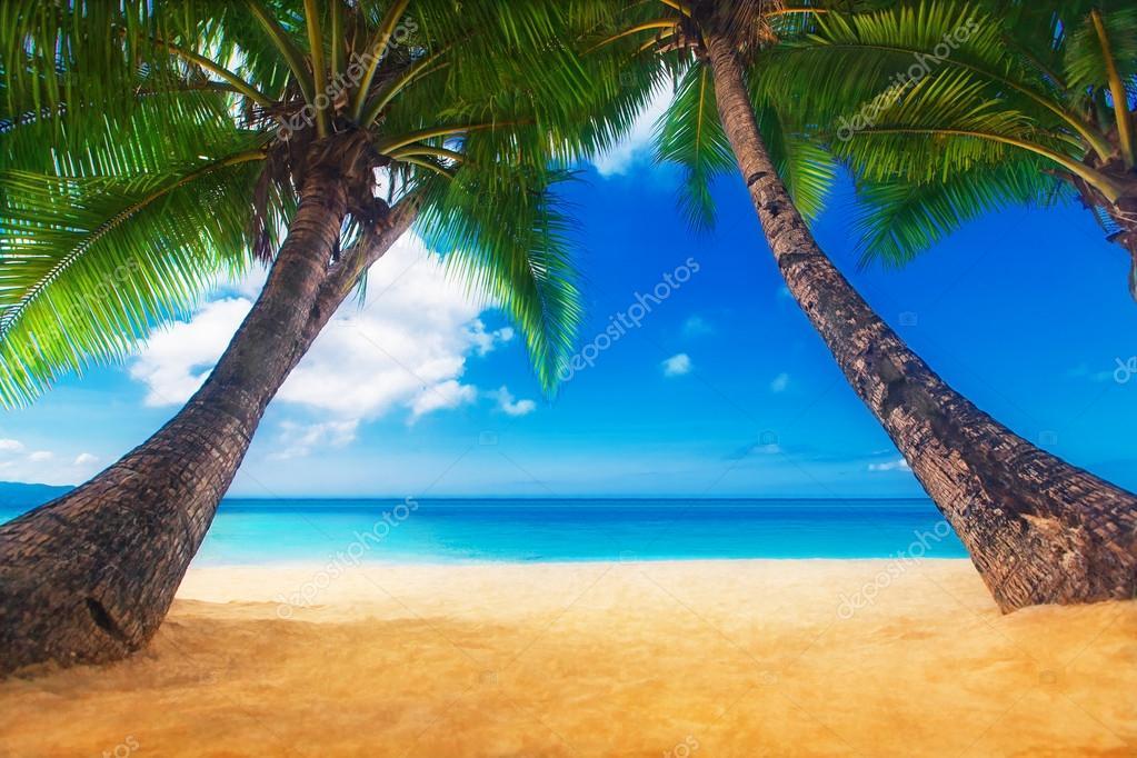 scena del sogno. bellissima palma sulla spiaggia di sabbia bianca. n ...
