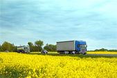 strada con traffico tra campi gialli