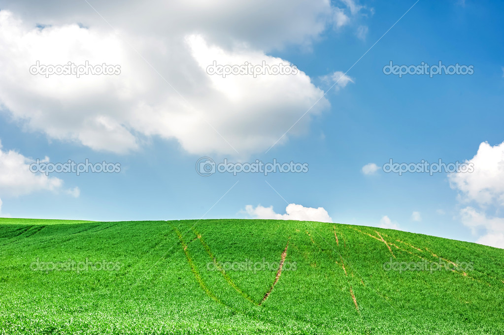 Spring landscape of green field