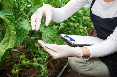 Gardening technician checking greenhouse plants