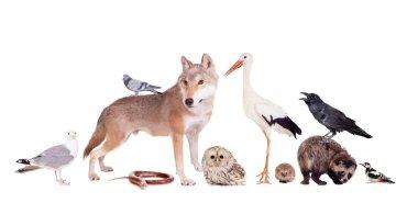 Group of eurasian animals