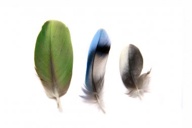 Three feathers on white