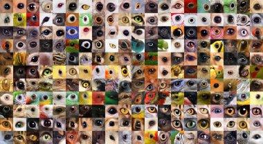 Patchwork of animals eyes