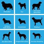 Fotografie Hunde-Symbole