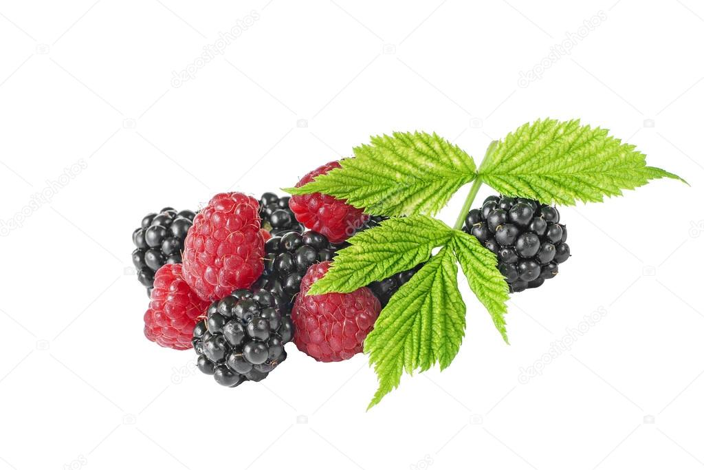 blackberries raspberries green leaf on white background
