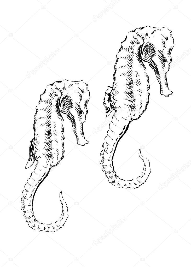 dibujo de un caballito de mar de la mano — Vector de stock © onot ...