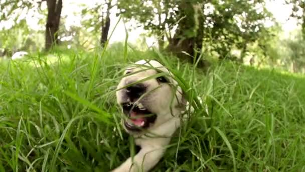 Curious puppy jumping out of grass