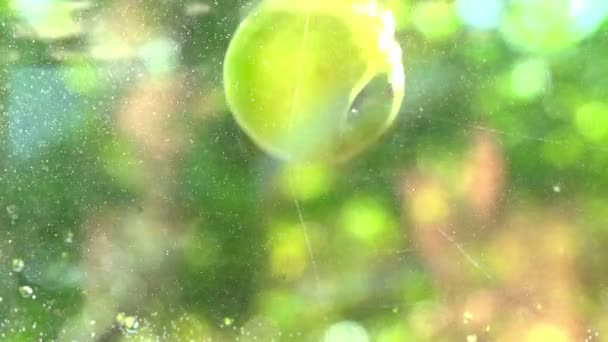 Green Apples falling into water