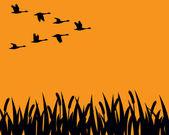 Fotografie Herde von kanadische Gänse im Flug über Sumpf in Kontur