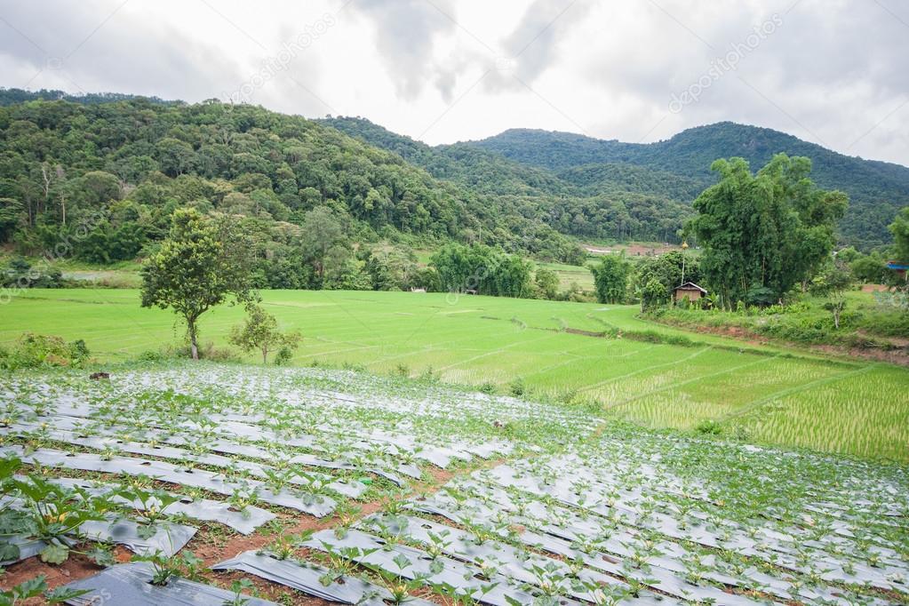 Terraza De Campo Hermoso Verde Arroz En Tailandia Foto De