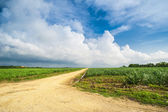 Photo Caribbean sugar cane plantations in Dominican Respublic