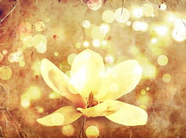 Romantic background with magnolia flowers