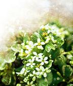 malé bílé květy