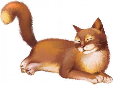 Young Red brown Cat