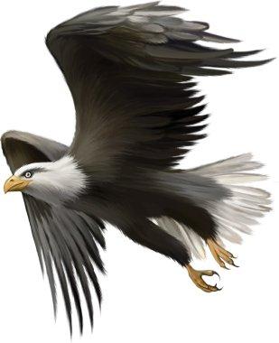 Vector illustration of american bald eagle