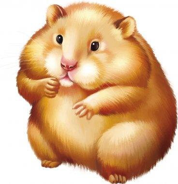 Cute red Hamster sitting