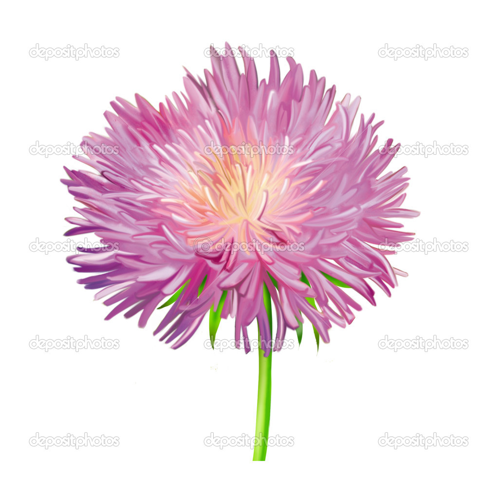 Thistle Flowers Pink Daisy Illustration Isolated On White Stock