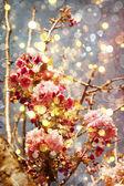 Photo Beautiful cherry tree flowers