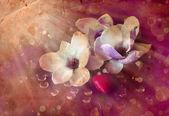 Fotografie květy magnólie a srdce