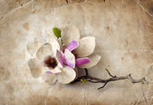 Fotografie květy magnólie