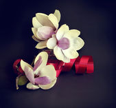 Fényképek magnólia virág és piros szalag