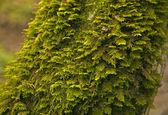 verde muschio sul tronco dalbero