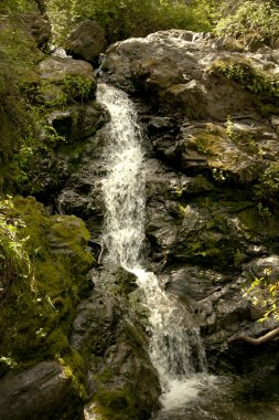 Mountain stream flows down from the mountains.