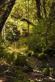Fotografie jarní příroda pozadí