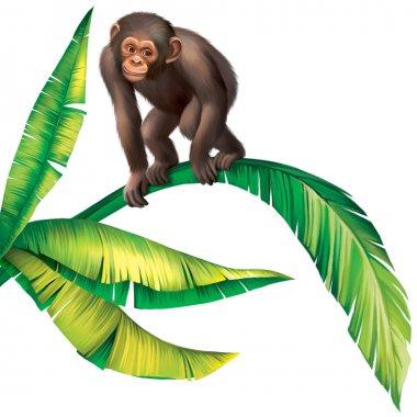 Baby Monkey Gorilla