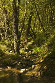 Fotografie Zelená krajina s paprsky slunce