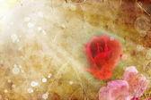 Fotografia Rosa rosa rossa
