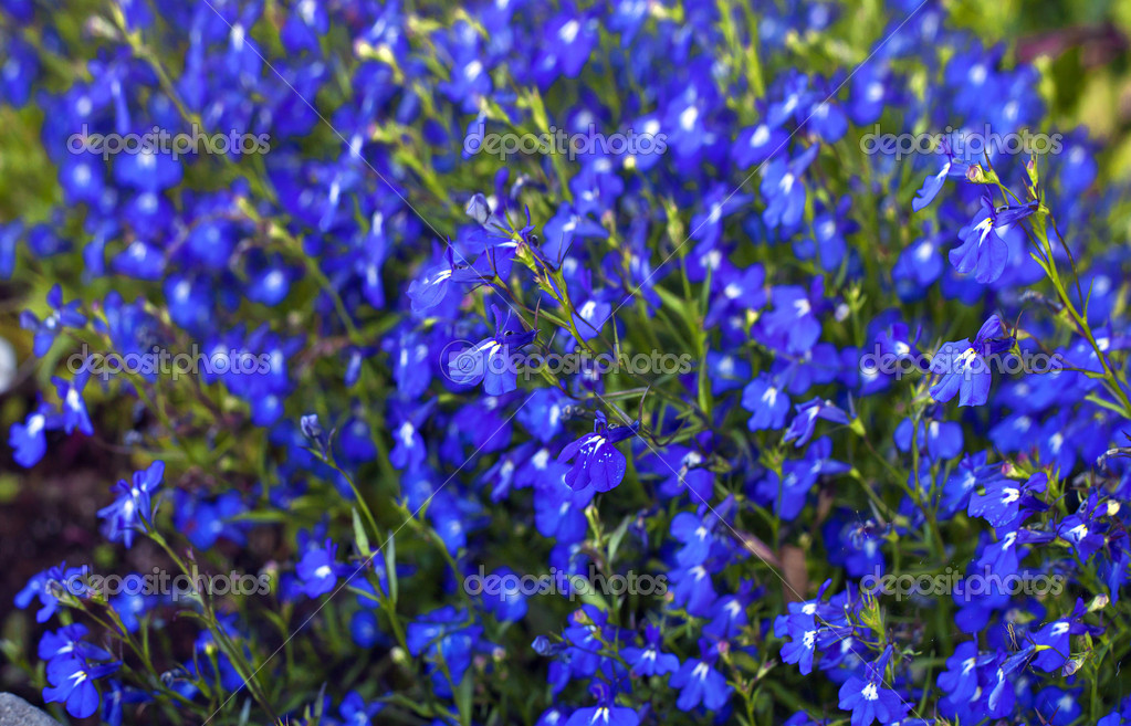 Bright Blue Flower Background Stock Photo 50906437