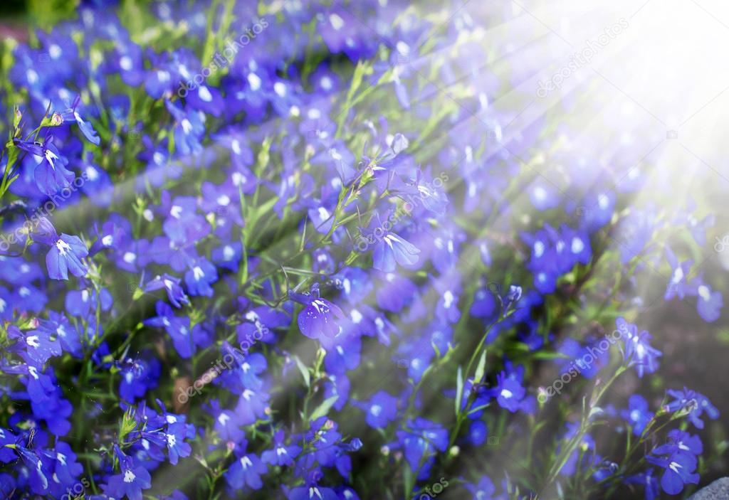Bright Blue Flower Background Stock Image