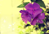 Fotografie Bright Purple flowers