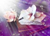 Květy magnólie a slunce