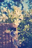 Fotografie Květiny s košíkem