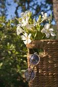 Fotografie Krásné bílé květy s košíkem