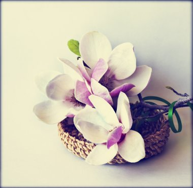 Spring background with magnolia flowers